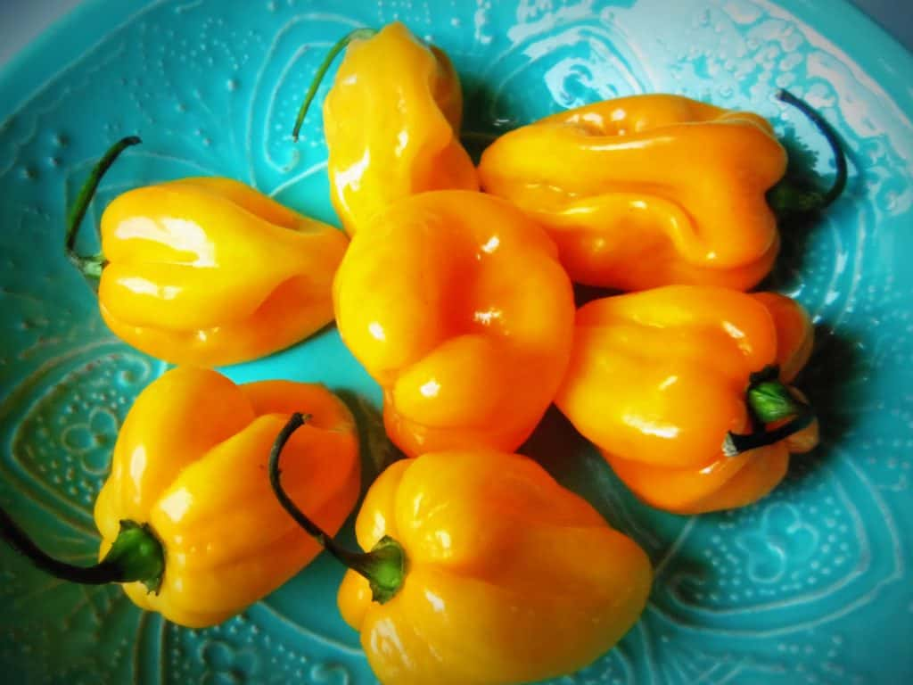 Habaneros, Beautiful Habaneros